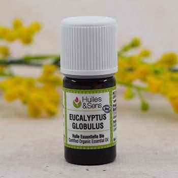 Huile essentielle biologique d'eucalyptus globulus HEBBD